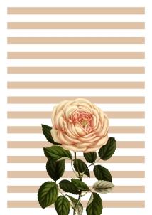 floral-rose